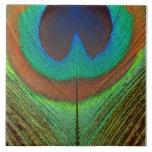 Animal - pájaro - pluma del pavo real azulejos cerámicos