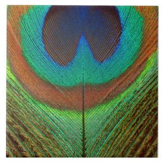 Animal - pájaro - pluma del pavo real azulejo cuadrado grande