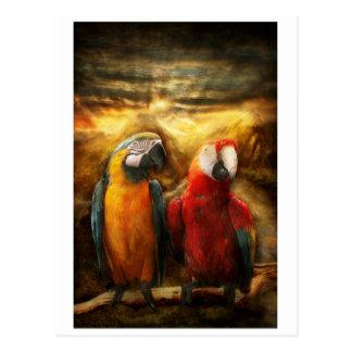 Animal - Parrot - Parrot-dise Postcard