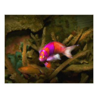"Animal - pescado - pleurotaenia de Pseudanthias Folleto 8.5"" X 11"""