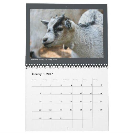 Animal Photos - 12-Month Calendar