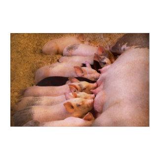 Animal - Pig - Comfort food Acrylic Print
