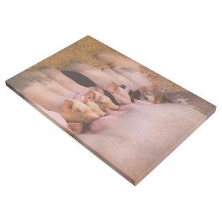 Animal - Pig - Comfort food Gallery Wrap
