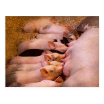 Animal - Pig - Comfort food Postcard