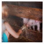 Animal - Pig - Feeding piglets Ceramic Tiles