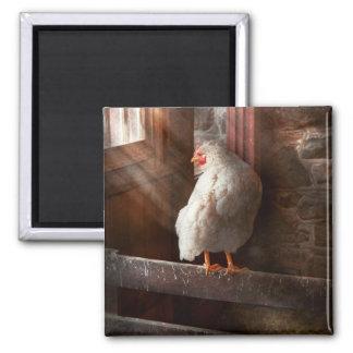 Animal - pollo - perdido en pensamiento imán de nevera