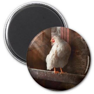 Animal - pollo - perdido en pensamiento iman de nevera