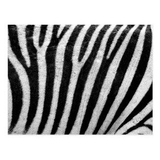 Animal Print, Zebra Stripes - Black White Postcard