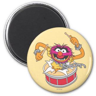 Animal que se estrella a través de los tambores imanes de nevera