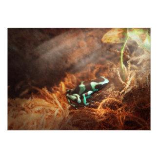 Animal - rana - lama la rana verde anuncio