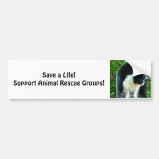 Animal Rescue - anti-cruelty Car Bumper Sticker