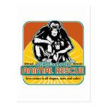 Animal Rescue Chimpanzee Post Cards