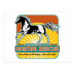 Animal Rescue Horse Postcard