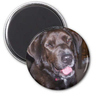 Animal rescue products magnet