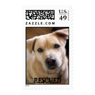 ANIMAL RESCUE YELLOW LAB MIX OFFICIAL USPS POSTAGE