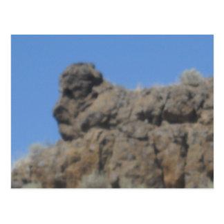 Animal Rock Formation Postcard