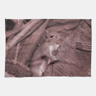 animal rojizo del árbol de la ardilla que sube toalla de mano