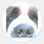 Animal Round Stickers