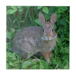 Animal salvaje del conejo de Brown Azulejo Cuadrado Pequeño
