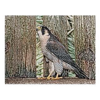 animal salvaje del diseño del pájaro del bosquejo postales