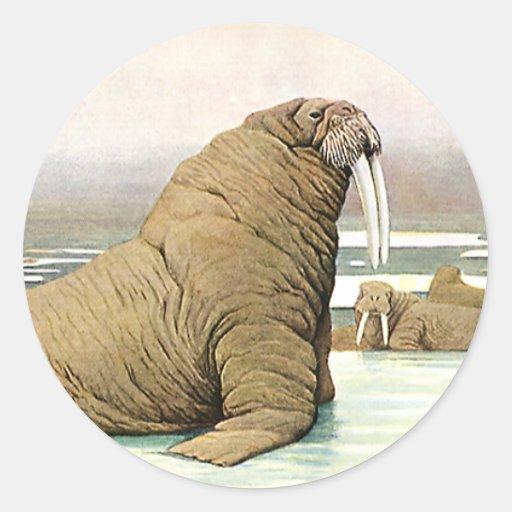 Animal salvaje del vintage, iceberg de la morsa en etiqueta redonda