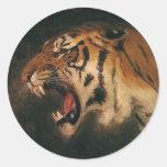 Animal salvaje del vintage, rugido del tigre de pegatinas redondas
