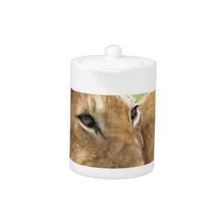 Animal salvaje joven del león del bebé