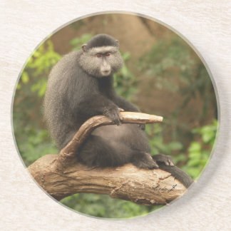 Animal Series---Lone Monkey on a Limb Drink Coaster