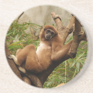 Animal Series---Reclining Monkey Coaster