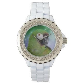 Animal severo del loro del Macaw Relojes De Mano