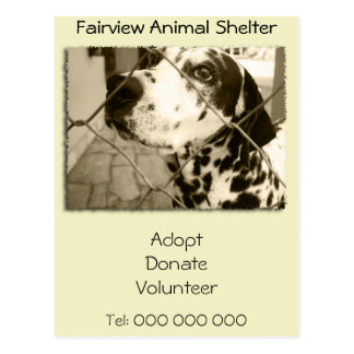 Animal Shelter Gifts and Stationery Postcard