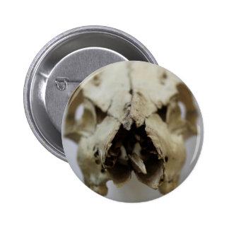 animal skull photograph pinback button