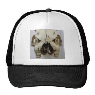 animal skull photograph trucker hat