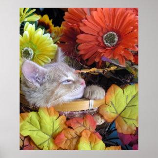 Animal soñoliento del bebé, gato de la naturaleza, poster