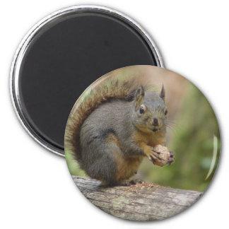 Animal squiral imán para frigorifico