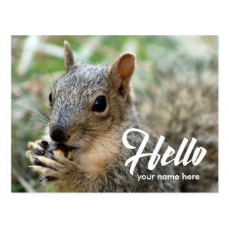 Animal squirrel funny cute hello postcard