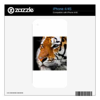 Animal Tiger Cat Amurtiger Predator Dangerous Decals For iPhone 4
