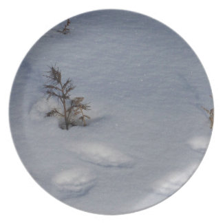 Animal Tracks in Snow Plate
