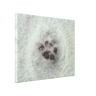 Animal tracks in the snow stretched canvas prints