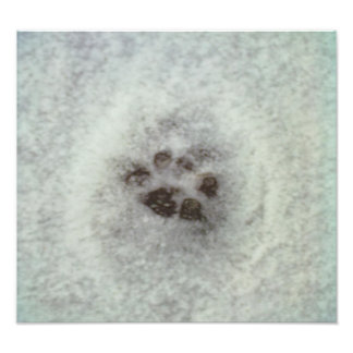 Animal tracks in the snow photo print