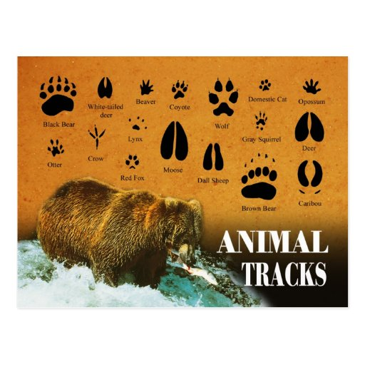 Animal Tracks Postcards