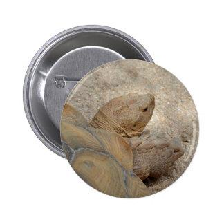 animal viejo de la tortuga de la opinión de la pin redondo de 2 pulgadas