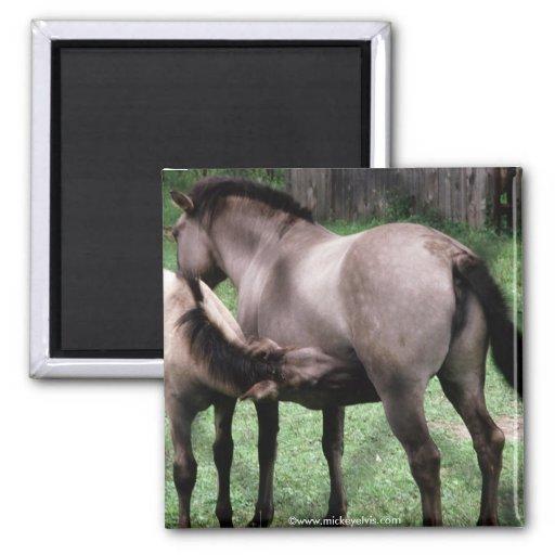 Animal Wild 1 Fridge Magnet
