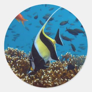 Animales acuáticos de los pescados pegatina redonda