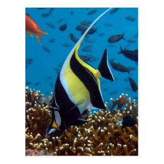 Animales acuáticos de los pescados postal