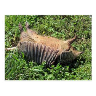 Animales atropellados del armadillo - Dasypodidae Postales
