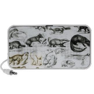 Animales carnívoros iPhone altavoz