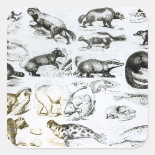 Animales carnívoros pegatina cuadrada