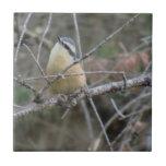 Animales de Aves de los pájaros de la fauna de Slo Teja