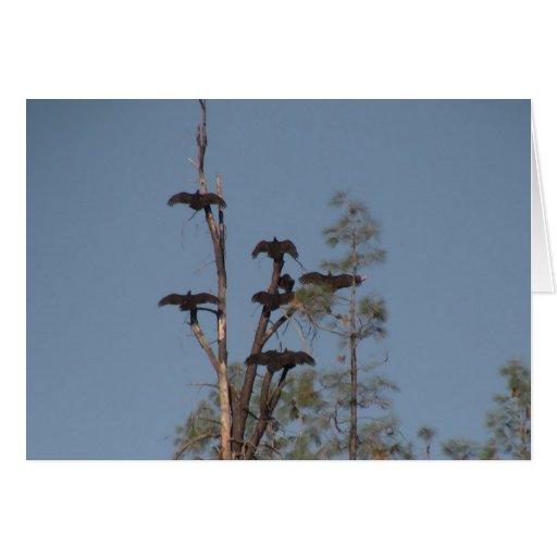 Animales de Aves de los pájaros de la fauna de Tarjeta De Felicitación